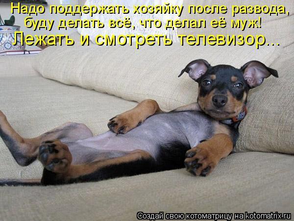 Котоматрица: Надо поддержать хозяйку после развода,  буду делать всё, что делал её муж! Лежать и смотреть телевизор...