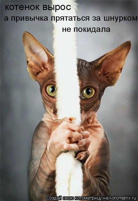 Котоматрица: котенок вырос а привычка прятаться за шнурком не покидала