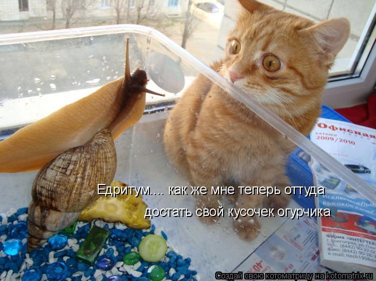 Котоматрица: Едритум.... как же мне теперь оттуда  достать свой кусочек огурчика
