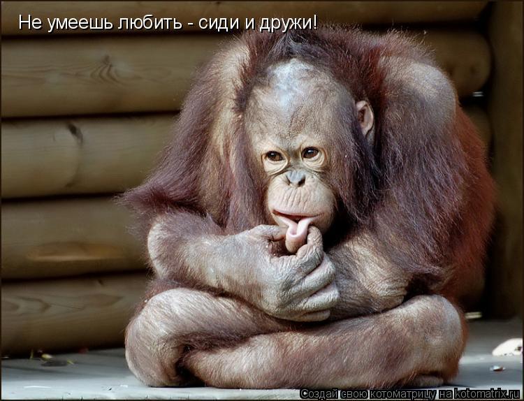 Котоматрица: Не умеешь любить - сиди и дружи!