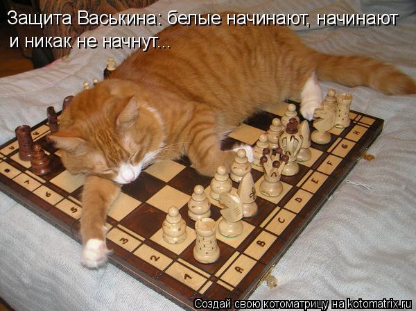 Котоматрица: Защита Васькина: белые начинают, начинают и никак не начнут...