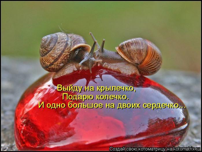 Котоматрица - Выйду на крылечко, Подарю колечко. И одно большое на двоих сердечко...