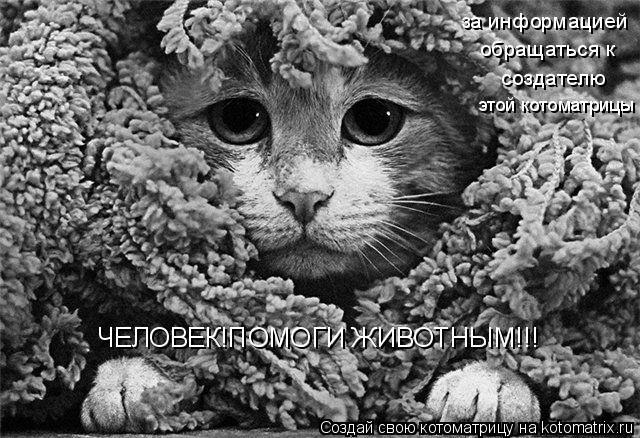 Котоматрица: ЧЕЛОВЕК!ПОМОГИ ЖИВОТНЫМ!!! за информацией обращаться к создателю этой котоматрицы