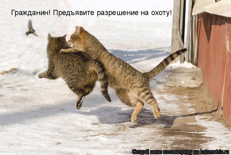 Котоматрица: Гражданин! Предъявите разрешение на охоту!