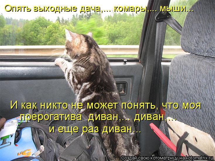 http://kotomatrix.ru/images/lolz/2010/05/02/562362.jpg