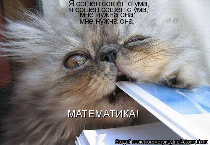 Котоматрица: Я сошёл сошёл с ума, я сошёл сошёл с ума, мне нужна она, мне нужна она, МАТЕМАТИКА!