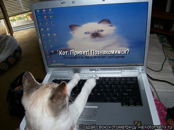 Котоматрица: Кот: Привет! Познакомимся? ...Пользователь Киса печатает сообщение