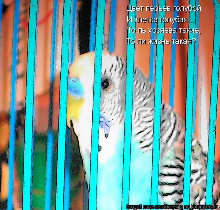 Котоматрица: Цвет перьев голубой, И клетка голубая... То ль хозяева такие, То ли жизнь такая?