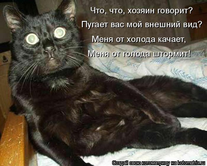 Котоматрица: Что, что, хозяин говорит? Пугает вас мой внешний вид? Меня от холода качает, Меня от голода штормит!