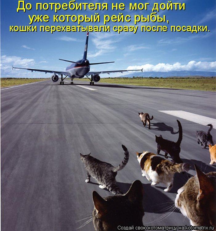 Котоматрица: До потребителя не мог дойти  уже который рейс рыбы,  кошки перехватывали сразу после посадки.