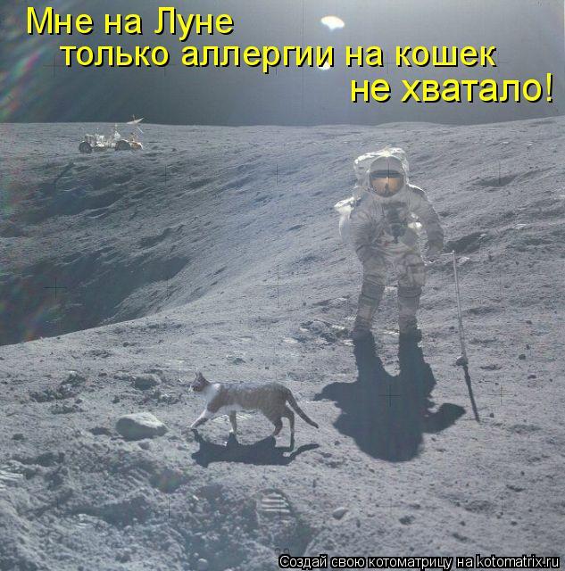 Котоматрица: Мне на Луне  только аллергии на кошек  не хватало!