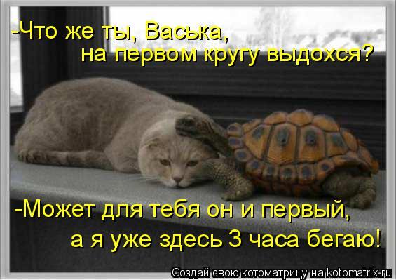 Котоматрица: на первом кругу выдохся? -Что же ты, Васька, -Может для тебя он и первый, а я уже здесь 3 часа бегаю!