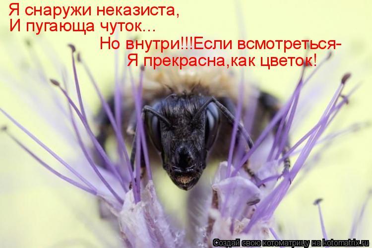 Котоматрица: Я снаружи неказиста, И пугающа чуток... Но внутри!!!Если всмотреться- Я прекрасна,как цветок!