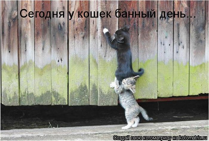 Котоматрица: Сегодня у кошек банный день...