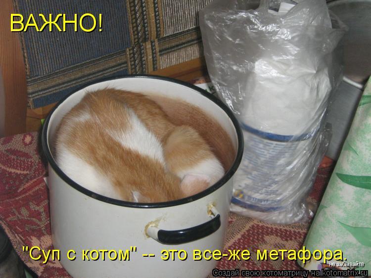 """Котоматрица: ВАЖНО! """"Суп с котом"""" -- это все-же метафора. не забывайте"""