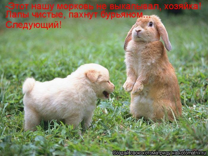 Котоматрица: -Этот нашу морковь не выкапывал, хозяйка! Лапы чистые, пахнут бурьяном... Следующий!