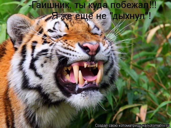 "Котоматрица: -Гаишник, ты куда побежал!!! Я же ещё не ""дыхнул""!"