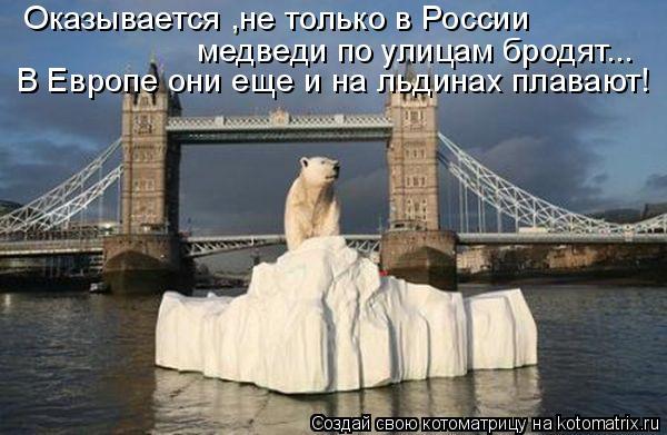 Котоматрица: Оказывается ,не только в России   медведи по улицам бродят... В Европе они еще и на льдинах плавают!