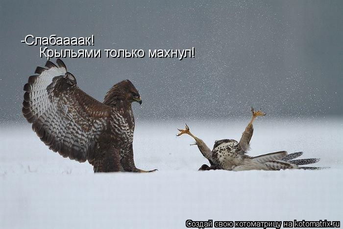 Котоматрица: -Слабаааак! Крыльями только махнул!