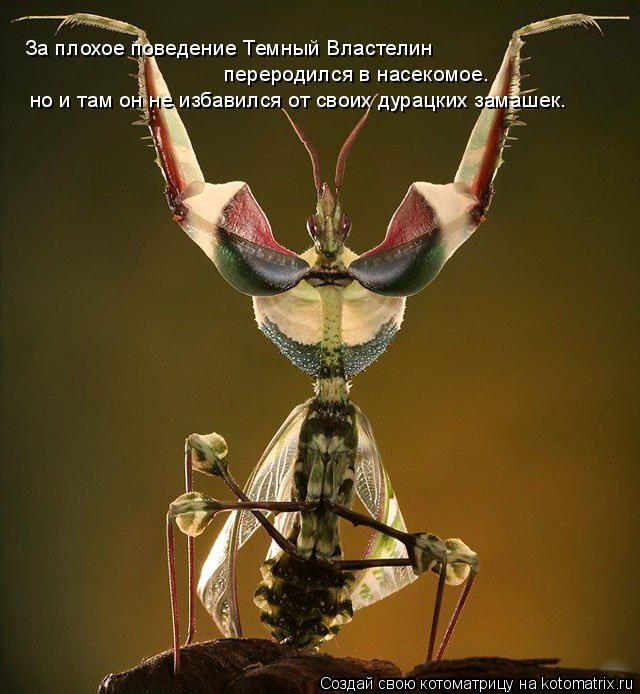 Котоматрица: За плохое поведение Темный Властелин переродился в насекомое. За плохое поведение Темный Властелин  переродился в насекомое. но и там он не