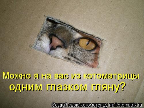 Котоматрица: Можно я на вас из котоматрицы  одним глазком гляну?