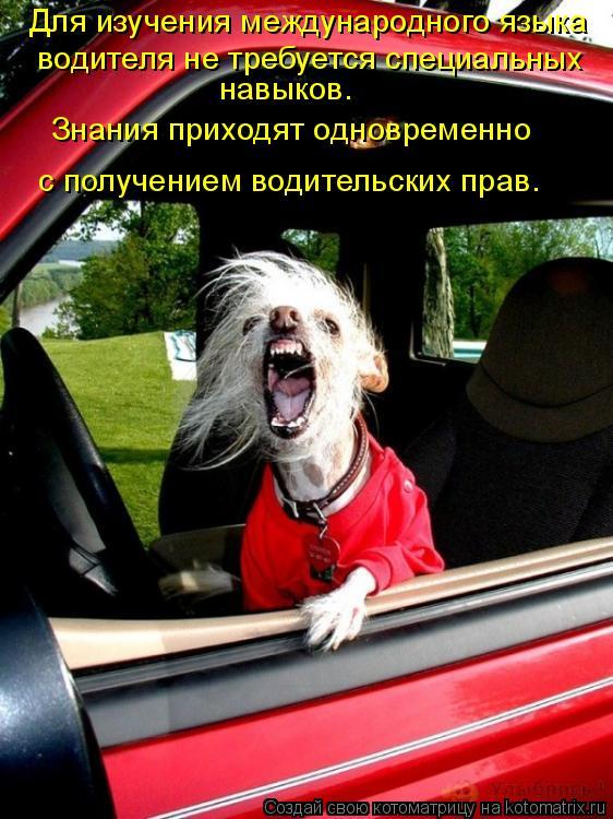 Котоматрица: Для изучения международного языка  водителя не требуется специальных  навыков.  Знания приходят одновременно   с получением водительских п