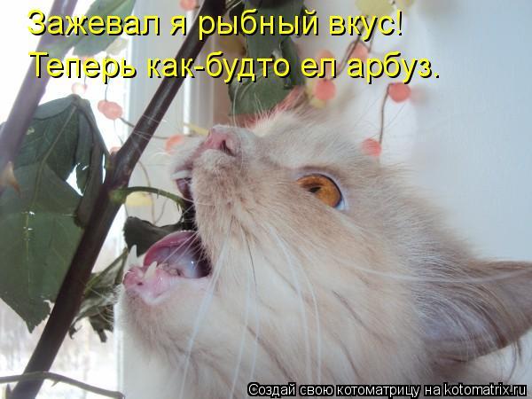 Котоматрица: Зажевал я рыбный вкус! Теперь как-будто ел арбуз.