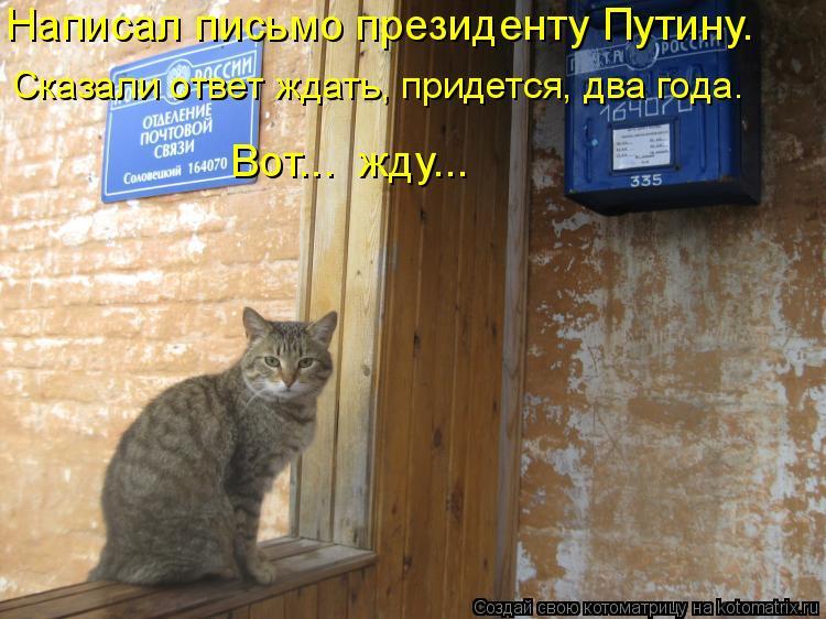 Котоматрица: Написал письмо президенту Путину. Сказали ответ ждать, придется, два года.  Вот...  жду…..