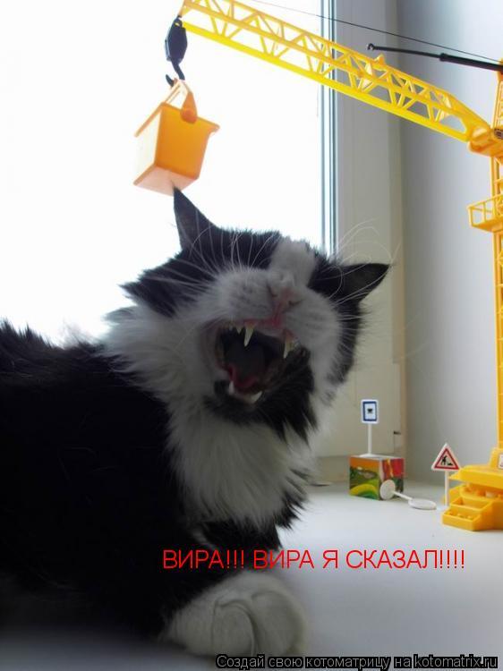 Котоматрица: ВИРА!!! ВИРА Я СКАЗАЛ!!!!