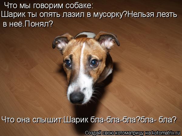 Котоматрица: Что мы говорим собаке: Шарик ты опять лазил в мусорку?Нельзя лезть в неё.Понял? Что она слышит:Шарик бла-бла-бла?бла- бла?