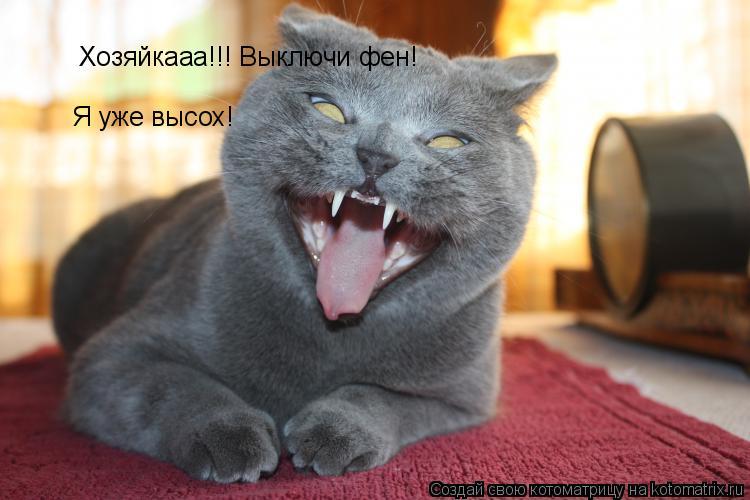 Котоматрица: Хозяйкааа!!! Выключи фен! Я уже высох!
