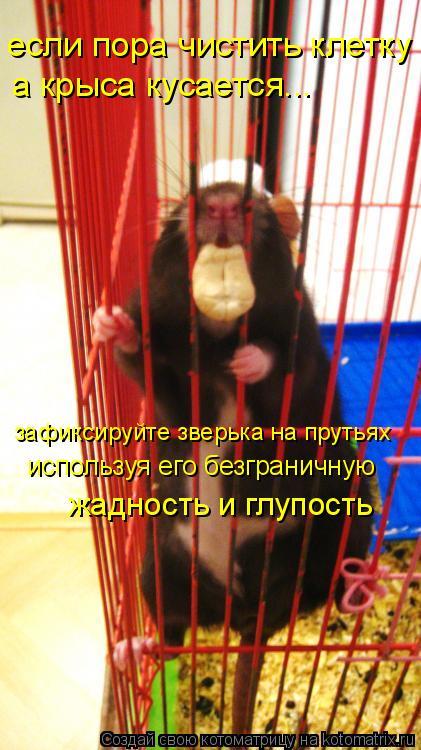 Котоматрица: если пора чистить клетку а крыса кусается... зафиксируйте зверька на прутьях используя его безграничную  жадность и глупость
