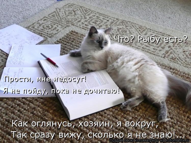 Котоматрица: Что? Рыбу есть? Прости, мне недосуг! Я не пойду, пока не дочитаю! Так сразу вижу, сколько я не знаю!... Как оглянусь, хозяин, я вокруг,