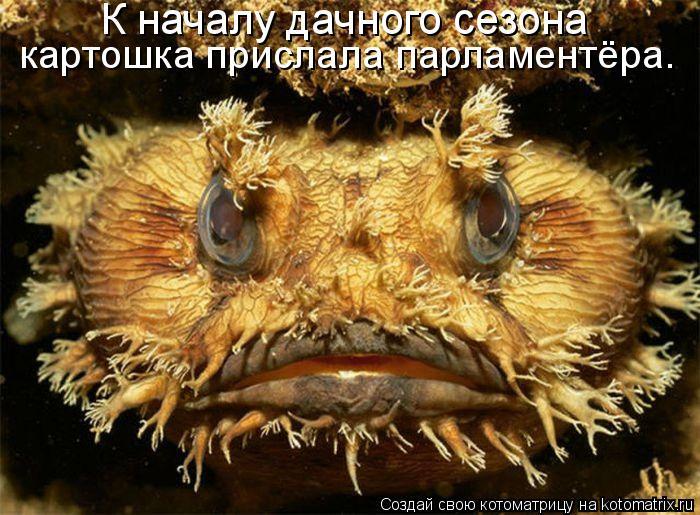 Котоматрица: К началу дачного сезона  картошка прислала парламентёра.
