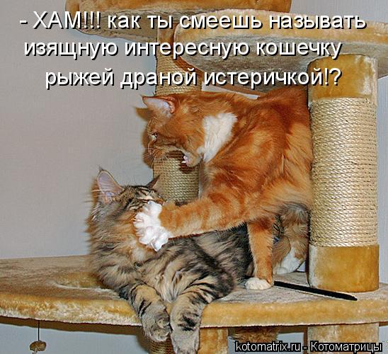 Котоматрица: - ХАМ!!! как ты смеешь называть изящную интересную кошечку рыжей драной истеричкой!?