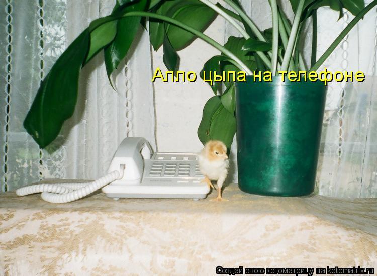 Котоматрица: Алло цыпа на телефоне