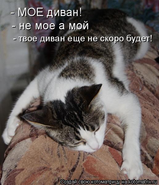 Котоматрица: - МОЕ диван! - не мое а мой - твое диван еще не скоро будет!