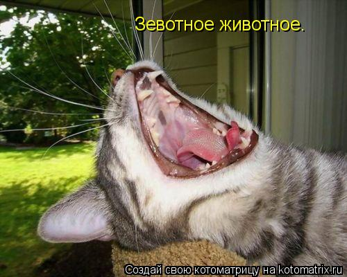 Котоматрица: Зевотное животное.
