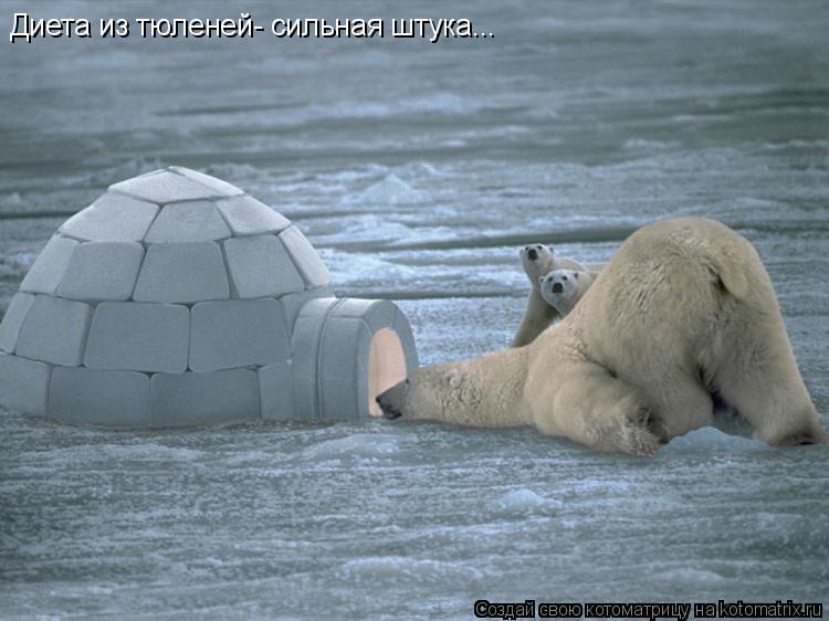 Котоматрица: Диета из тюленей- сильная штука...