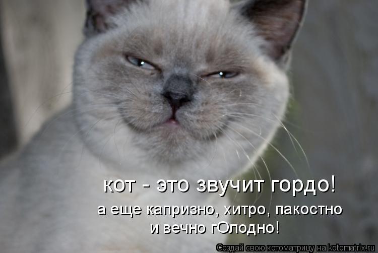 Котоматрица: кот - это звучит гордо! и вечно гОлодно! а еще капризно, хитро, пакостно