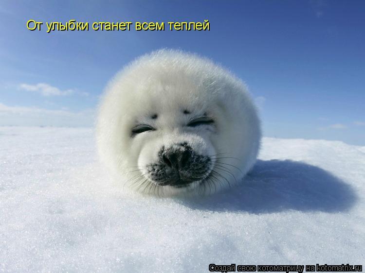 Котоматрица: От улыбки станет всем теплей