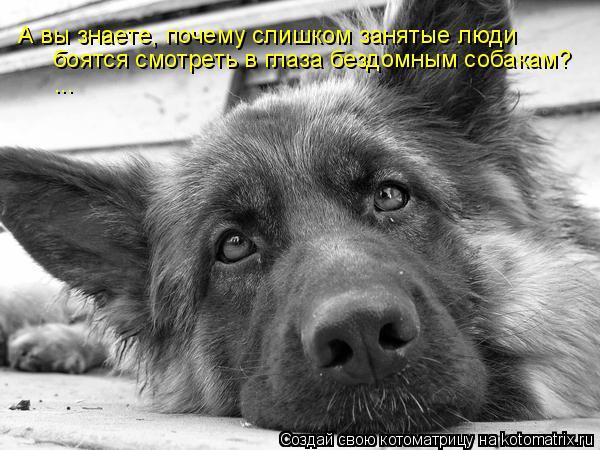 Котоматрица: боятся смотреть в глаза бездомным собакам? ... А вы знаете, почему слишком занятые люди