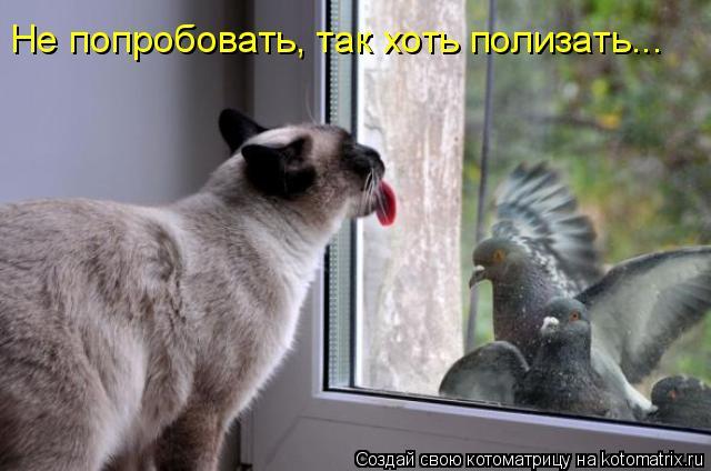 Котоматрица: Не попробовать, так хоть полизать…..