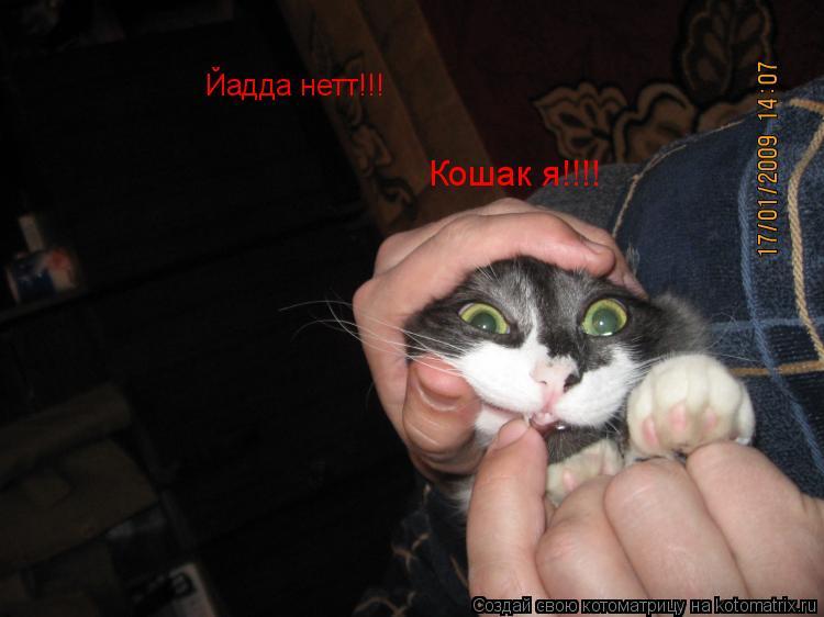 Котоматрица: Йадда нетт!!! Кошак я!!!!
