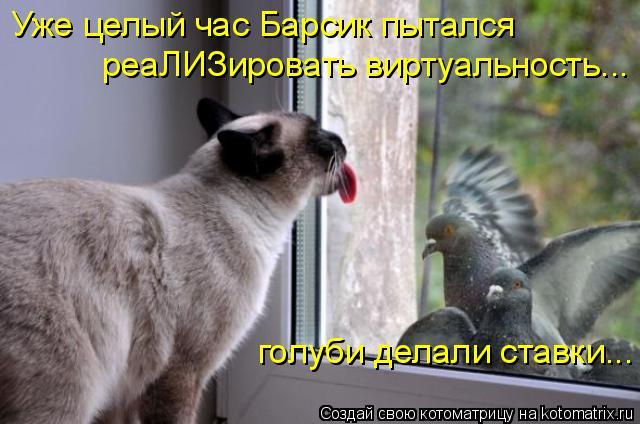 Котоматрица: Уже целый час Барсик пытался голуби делали ставки... реаЛИЗировать виртуальность...