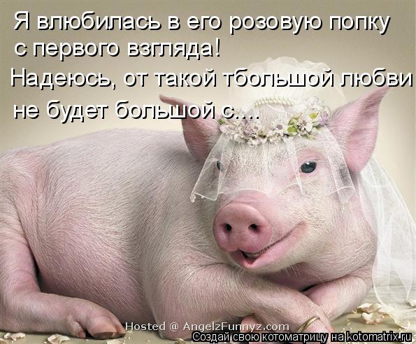 Котоматрица: Я влюбилась в его розовую попку с первого взгляда! Надеюсь, от такой тбольшой любви не будет большой с....