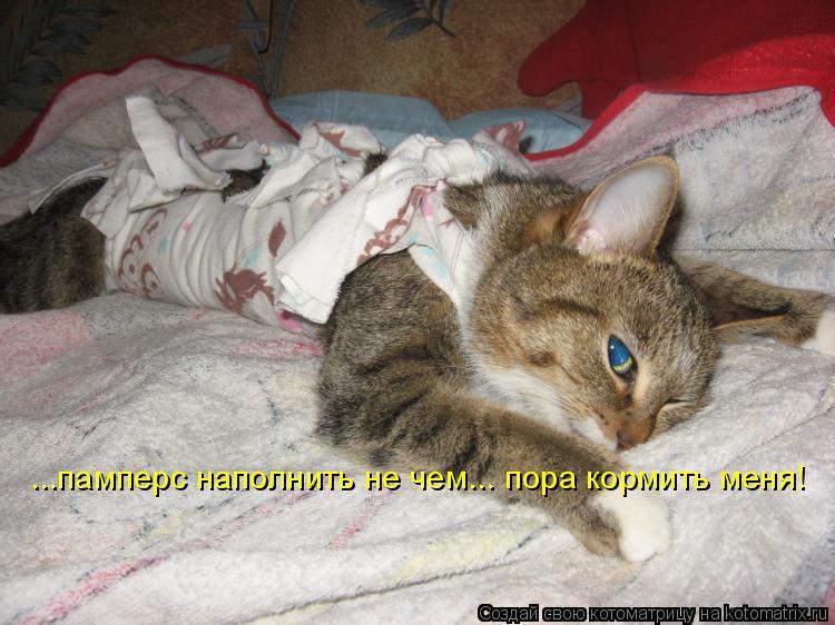 Котоматрица: ...памперс наполнить не чем... пора кормить меня!