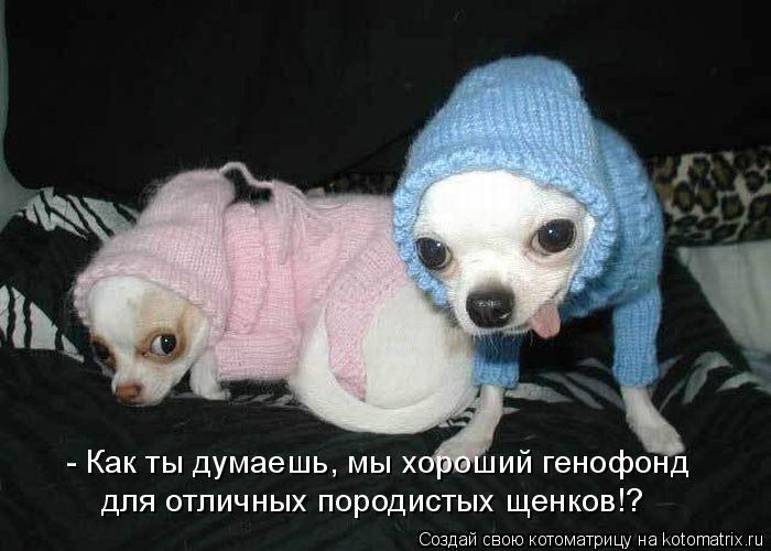Котоматрица: - Как ты думаешь, мы хороший генофонд для отличных породистых щенков!?