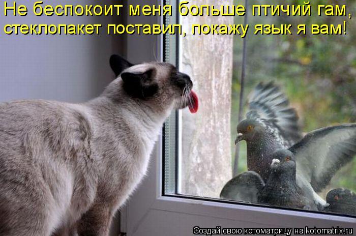Котоматрица: Не беспокоит меня больше птичий гам,  стеклопакет поставил, покажу язык я вам!