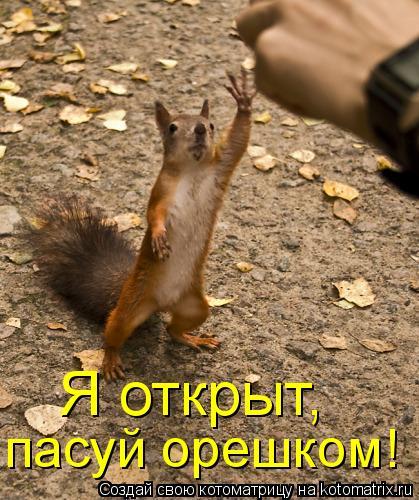 Котоматрица: Я открыт,  пасуй орешком!